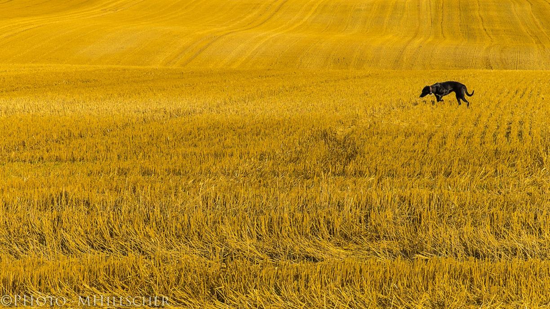 Spätsommerzeit ist Herbstgrasmilbenzeit