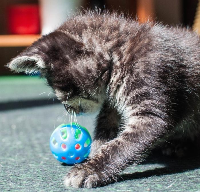 Katze blind Katzenschnupfen