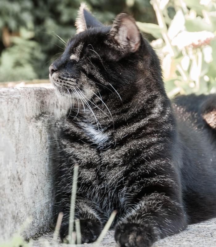 Katze, blind