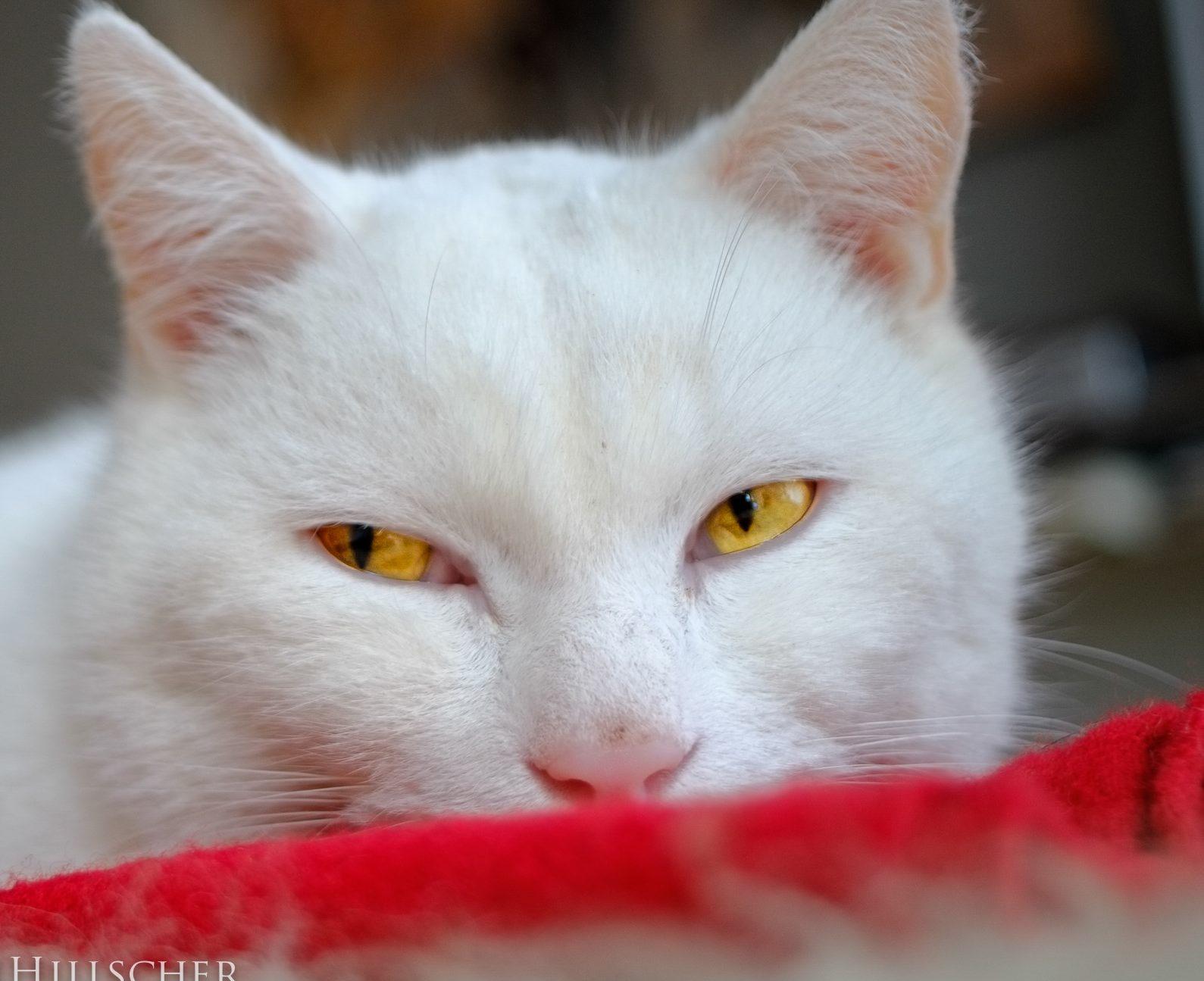 Stress bei Katzen