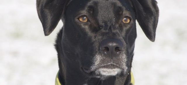 Borrelioseimpfung beim Hund